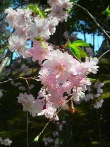 漢方アロマセラピーサロン&スクール 天使のたまごのブログ
