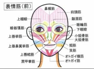 顔の筋肉図_-_Google_検索